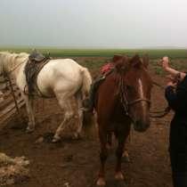 Приглашаем в Монголию, в г.Улан-Батор