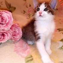 Пуховый котенок, в Уфе