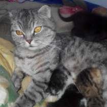 Отдам котят, в г.Харьков