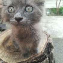Отдам котенка мальчика(2 месяца), в Майкопе