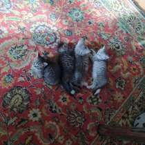 Продам котят!!, в г.Минск