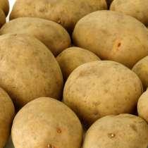 Картофель семенной в Астрахани, в г.Гродно