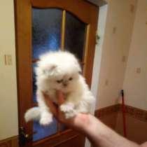 Продам котенка, в Ростове-на-Дону