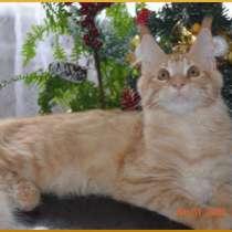 Великолепные котята мейн-кун из питомника, в Уфе