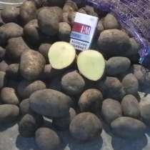 Выращивание картофеля, в Санкт-Петербурге