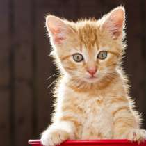 Отдам бесплатно котёнка, в Раменское
