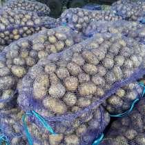 Картофель Гала в Кемерово, свежий урожай, в Кемерове