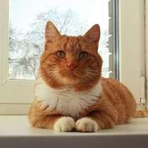 Рыжий богатырь Добрыня - добрый кот в добрые руки, в Калуге