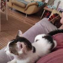 Потерялся кот, в г.Острошицкий Городок