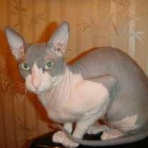 Отдам ласкового кота в добрые руки бесплатно, в Москве