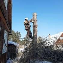 Спил деревьев, в Иркутске