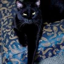 Черная кошка в хорошие руки, в г.Ташкент