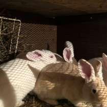 Кролики/Мясо кроликов, в Костроме