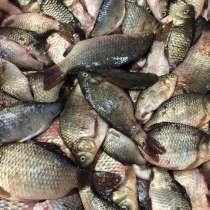 Продам живую рыбу, в Симферополе