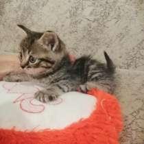 Кошечка в хорошие руки, в Иркутске