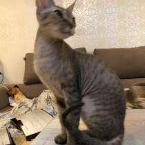 Кошечка 1 год, дарим, в г.Одесса