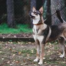 Обожающий человека молодой пёс, в Санкт-Петербурге
