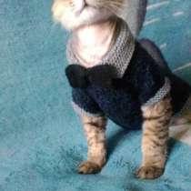 Вязаная одежда для кошек и собак, в Челябинске