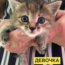 Котенок 1 месяц, в Кстове