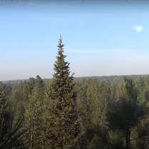 Лес на корню 1 090 806 м3, в Томске