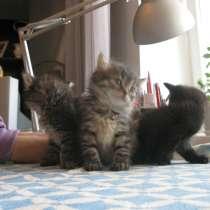 Пасхальный котенок хорошим людям, в Воронеже