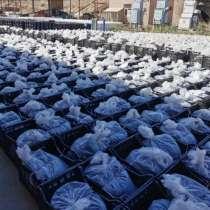 Битумная мастика, производство Туркменистан, в г.Ашхабад