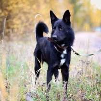 Брутальный красавец-пёс с идеальным характером, в Санкт-Петербурге