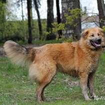 Солнечный красавец Финик, молодой ласковый пес, в Москве