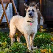 Пёс редкой красоты ищет дом, в Санкт-Петербурге