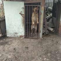 Отдам собаку большую двортерьер для охрани, в г.Кременчуг