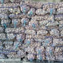 Картофель, в Каневской