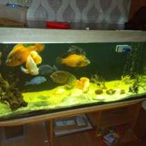 Продается аквариум с рыбоми, в Ливнах