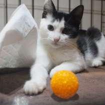 Хорошенький котенок с круглыми глазками, в Санкт-Петербурге