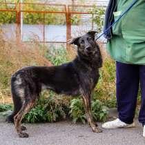 Юная собака космического окраса, в Санкт-Петербурге