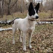 Продается щенок, девочка, в Челябинске