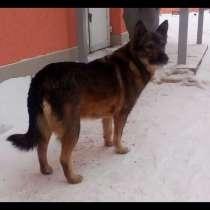 Собака Найда ищет дом, в Красноярске