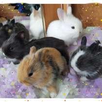 Мини крольчата, в г.Орша