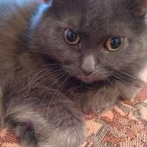 Продам кота, в г.Усть-Каменогорск