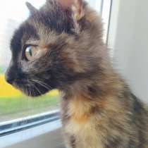 Котёнок ищет дом, в г.Гродно