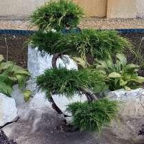 Ландшафтный дизайн. Стригу хвойные растения, в г.Харьков