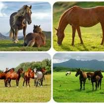 Куплю лошадей жеребят живым весом в беларуси, в г.Орша
