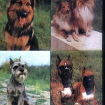 Открытки собаки Чехословакия, в Санкт-Петербурге