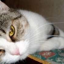Кошка Крася в самые ответственные и верные руки, в Великом Новгороде