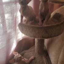 Котята, продам Испания, в г.Valencia