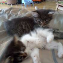 Срочно отдадим котика и кошечку!!!, в Домодедове