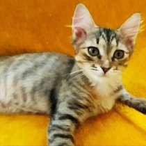 Котенок девочка, в г.Могилёв