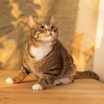 Котик ищет дом, в Москве