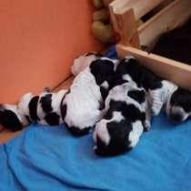 Продам щенков, в Сызрани