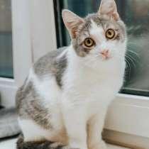 Котенок Мышка в поисках доброго сердца, в Москве