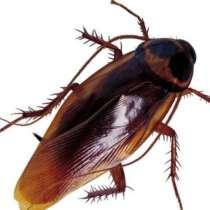 Выведение клопов и тараканов в ПМР, в г.Тирасполь